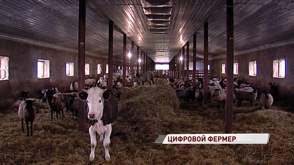 Ярославцы представят проект удаленного выращивания скота на московской агровыставке