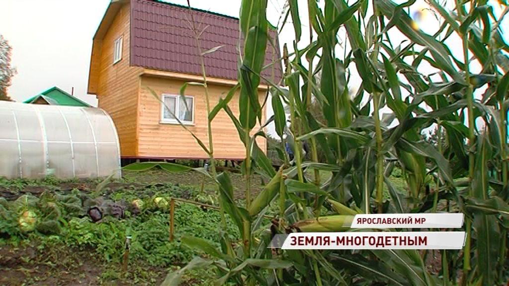 Многодетные семьи могут получить в собственность участки земли: как это сделать