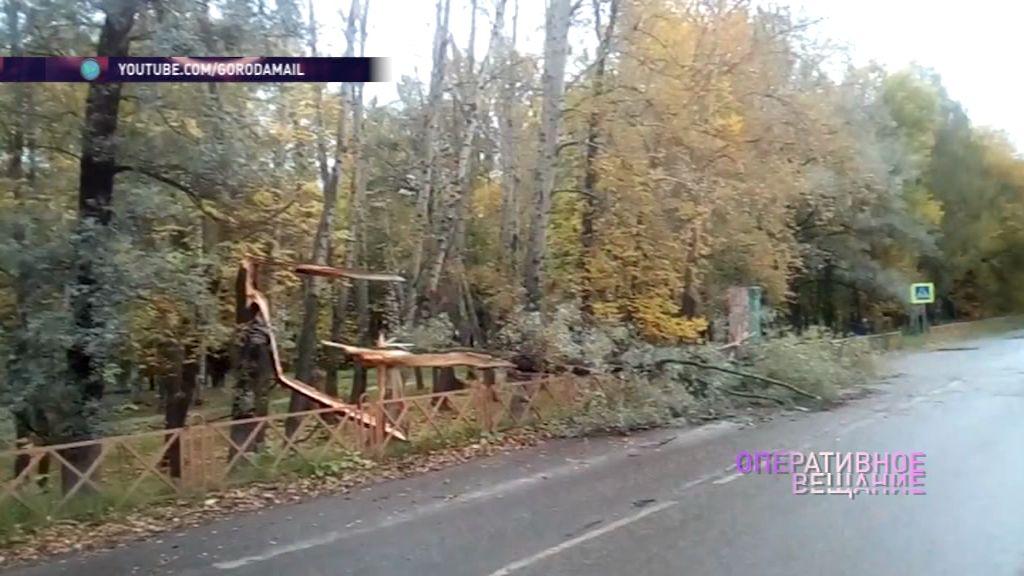 Большое дерево рухнуло на улице Щепкина