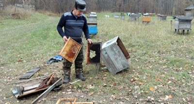 В Большесельском районе добыли медведя, разорявшего пасеку
