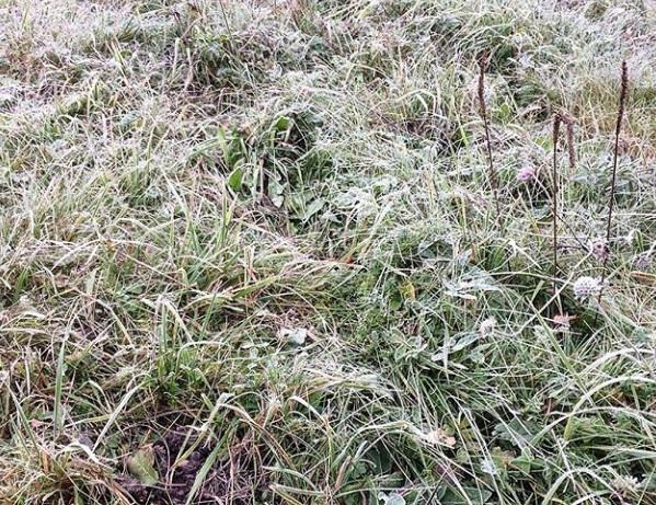 На территории Ярославской области ударили заморозки: МЧС опубликовало экстренное предупреждение