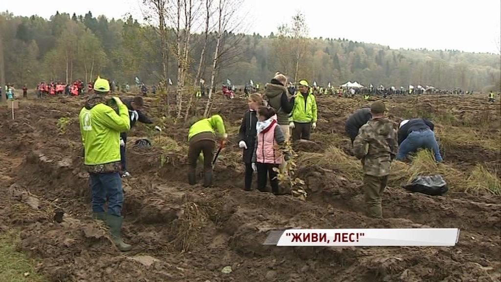 Ярославская область приняла участие в акции «Живи, лес!»: сколько деревьев уже посадили