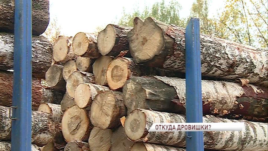 В Ярославле ловят «черных лесорубов», проверяя фуры с древесиной