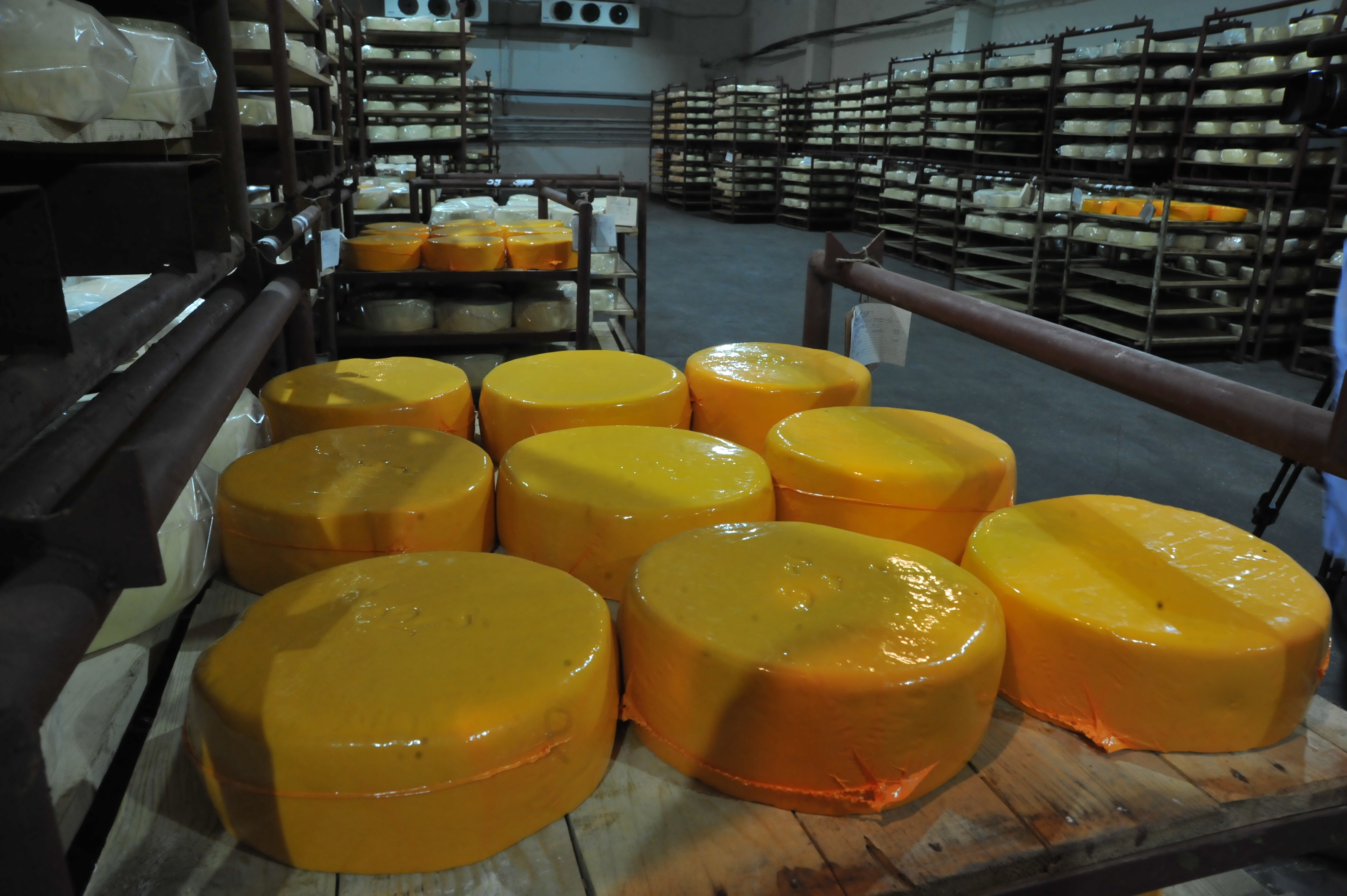 В Угличском районе будут производить закваски для сыров