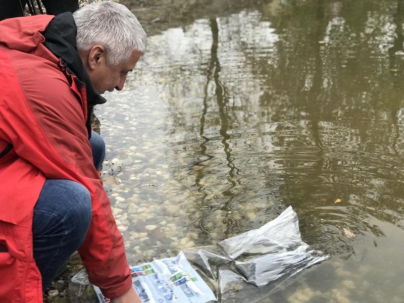 Пруд в Карякинском парке в Рыбинске будут очищать рыбы