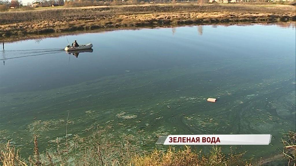 В области зацвела река Ить: жители обеспокоены гибелью рыб и лягушек