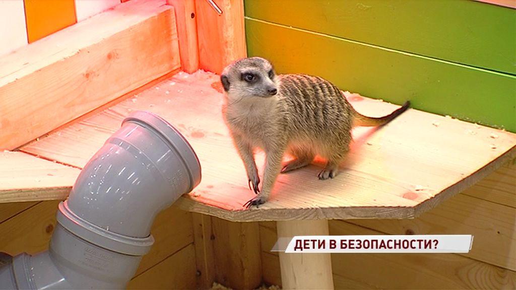 Опасные клетки и животные без паспортов: в ярославский контактный зоопарк нагрянула проверка