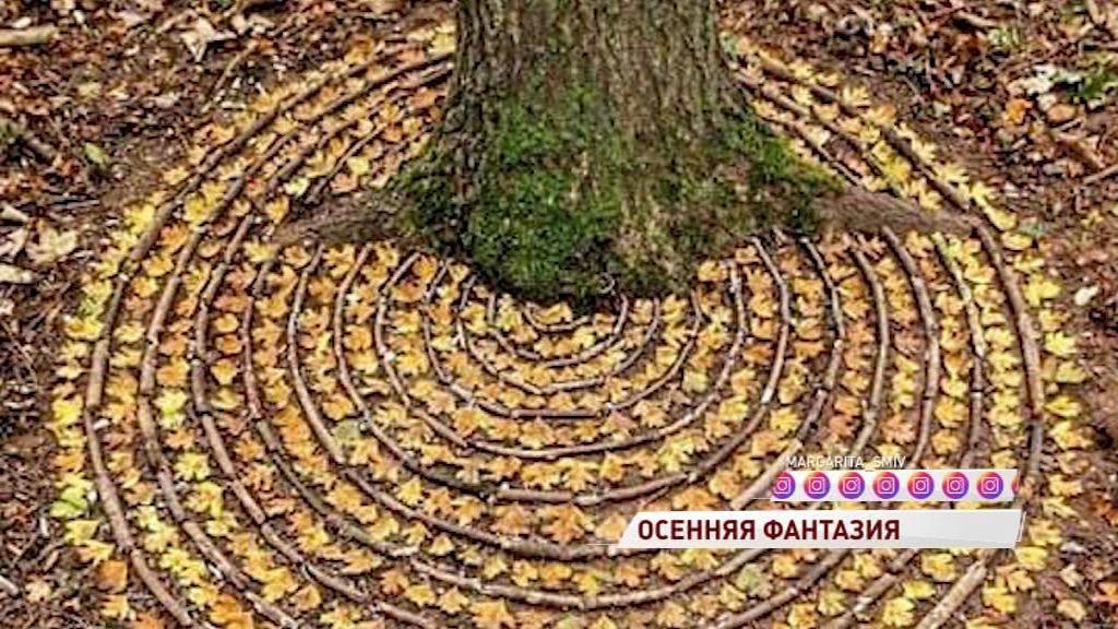 В Рыбинске неизвестные выложили под деревом узор из опавших листьев