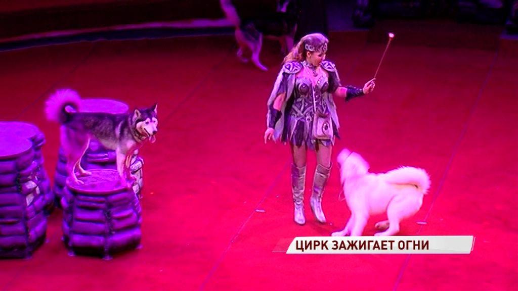 Премьера нового шоу в ярославском цирке: как зрители оценили выступление