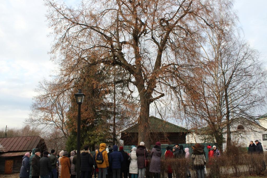 Двухвековой липе из Карабихи присвоен статус памятника живой природы