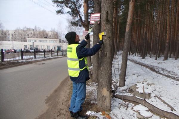 За повреждение деревьев рекламой организации будут штрафовать на полмиллиона
