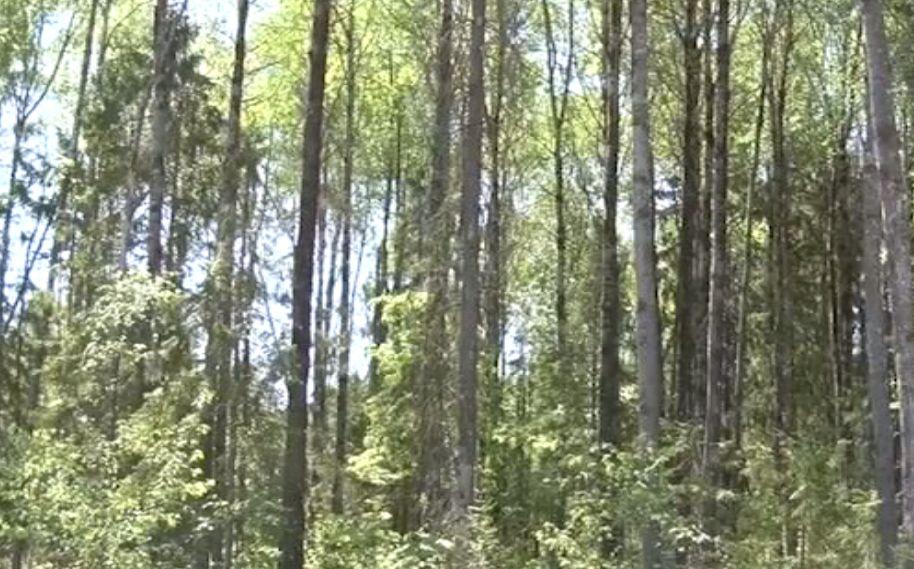 Нарубил дров на 200 тысяч: полиция задержала жителя Некоузского района за незаконную порубку
