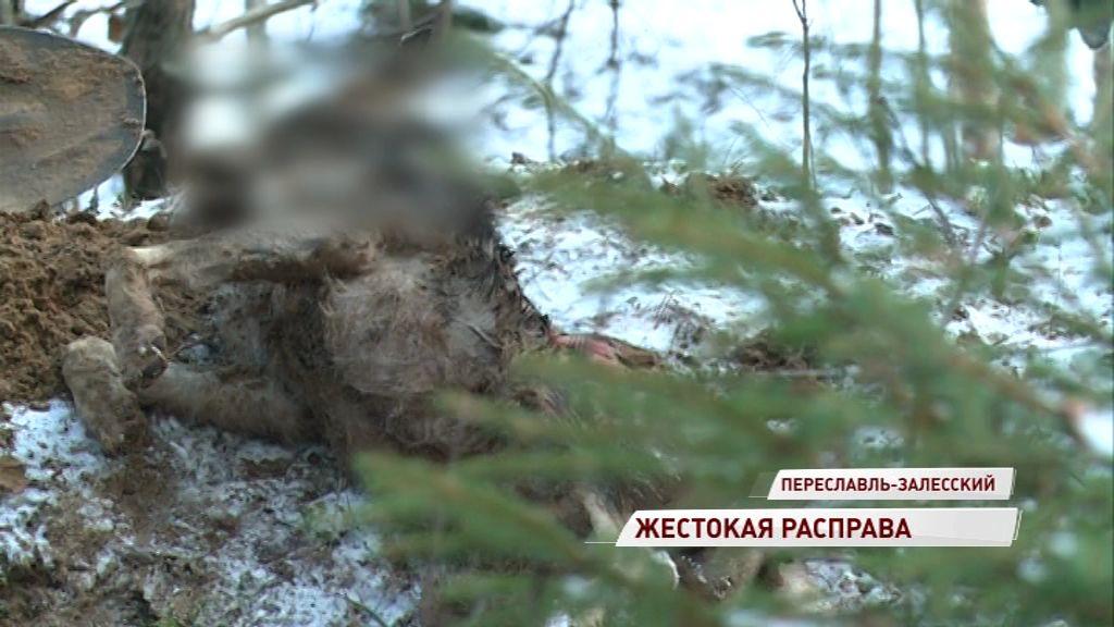 В Переславле нашли истерзанные трупы собак: кому понадобилось мучить животных