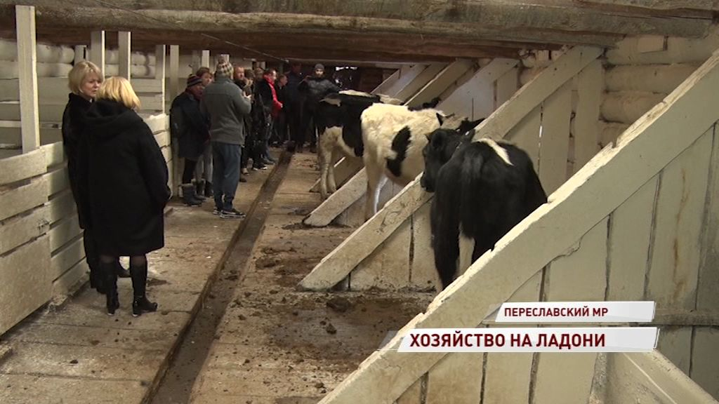 Ярославцы могут вырастить корову онлайн: в регионе начал работать «Цифровой фермер»