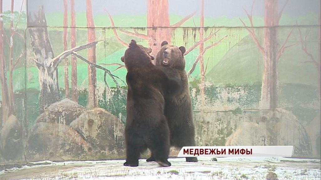 Медведи готовятся к зиме: развеиваем самые популярные мифы о спячке