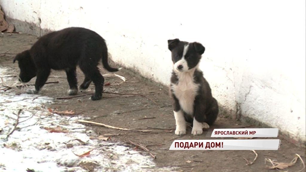 В деревне Мордвиново щенячью семью выкинули на улицу: жители опасаются, что малышей усыпят