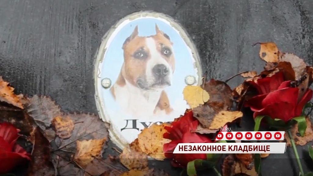Природоохранная прокуратура возбудила дело из-за незаконного кладбища домашних животных