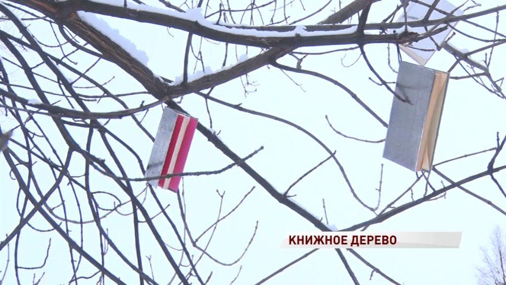 На дереве в Первомайском бульваре «выросли» книги: что означает новый арт-объект