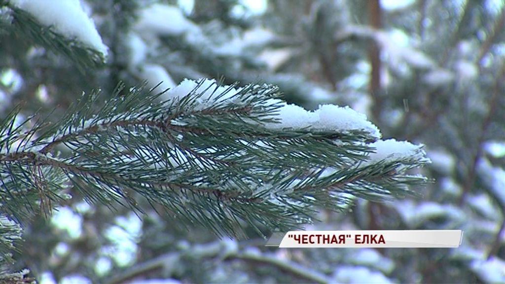 Запах Нового года: сколько стоит живая елка и каков штраф за незаконную вырубку