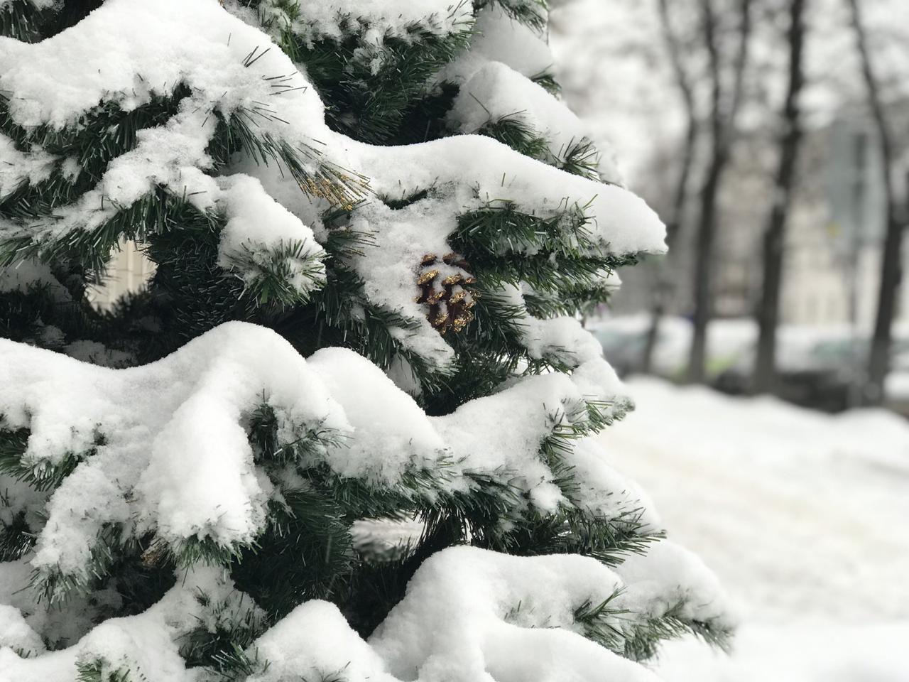 В Новый год ярославцев зовут на Советскую площадь: что в программе