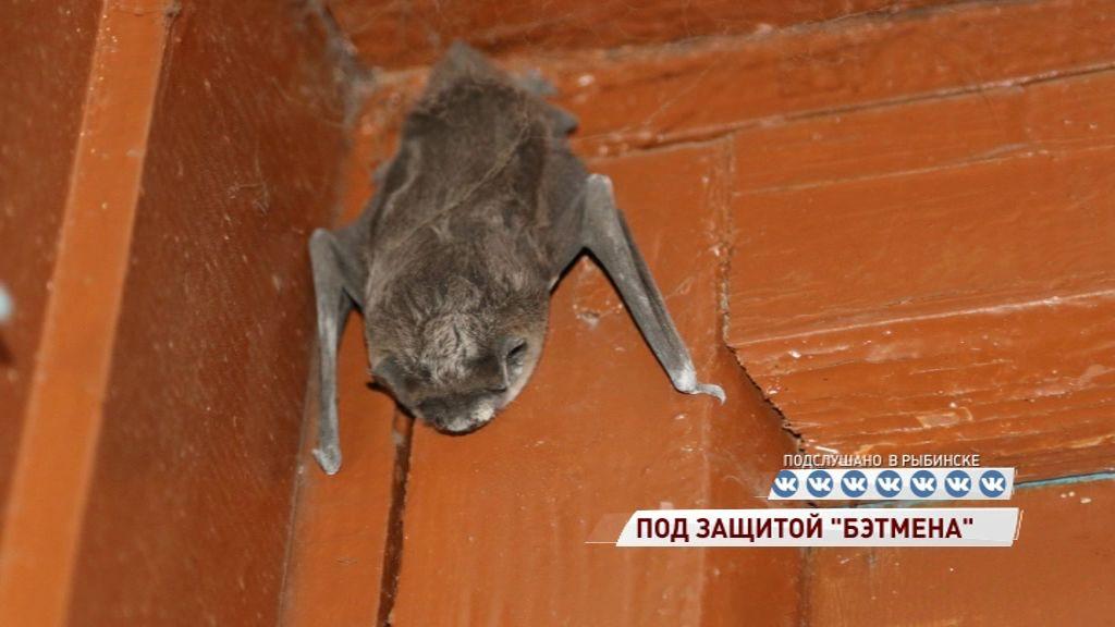 Летучая мышь впала в спячку прямо в подъезде жилого дома