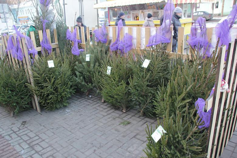 Ярославцам предлагают после праздников сдать елки в зоопарк