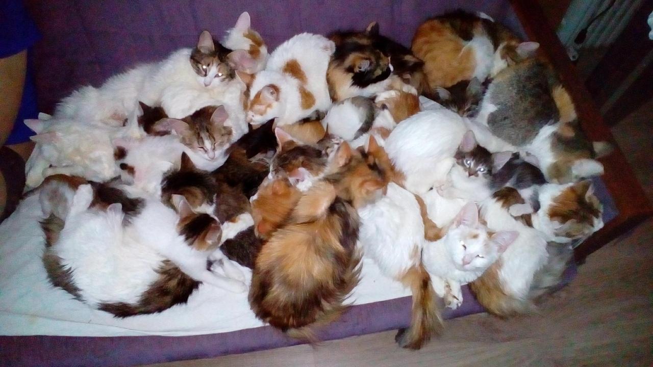 Ярославская семья подобрала в поле мешок с 20 кошками и приютила всех