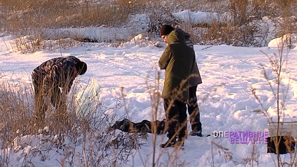 Поссорились из-за ограды на могиле кошки: подробности убийства у поселка Полесье