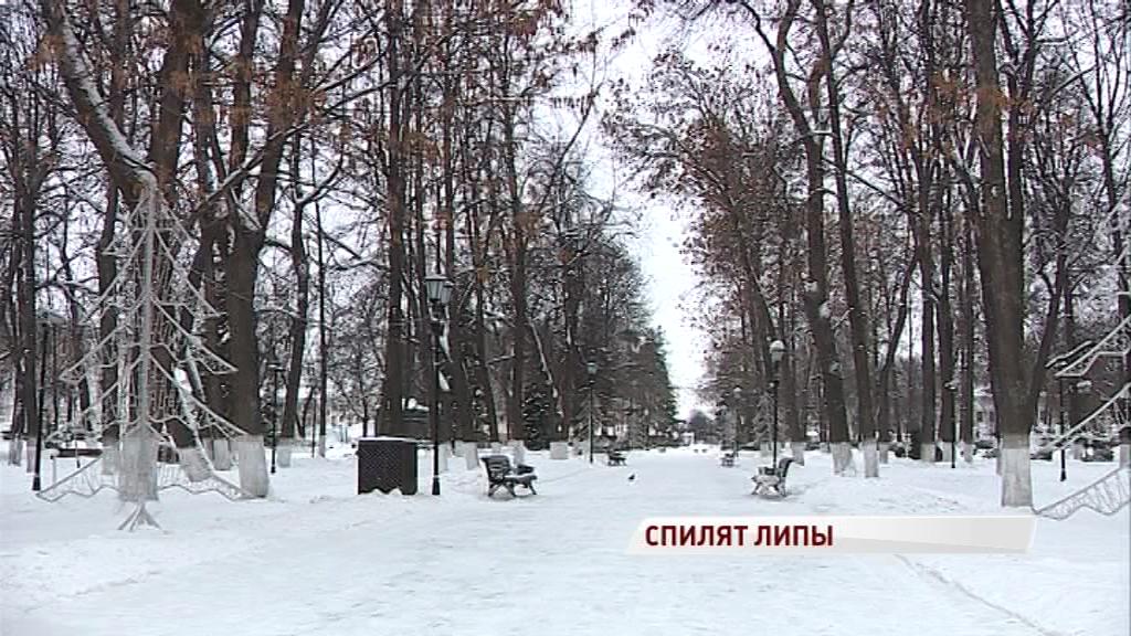 В Демидовском сквере Ярославля спиливают столетние липы