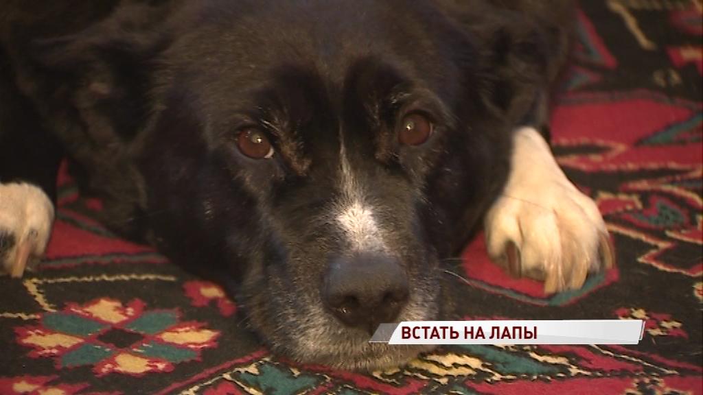 Любовь сильнее приговора врачей: как ярославна помогла собаке снова встать на лапы