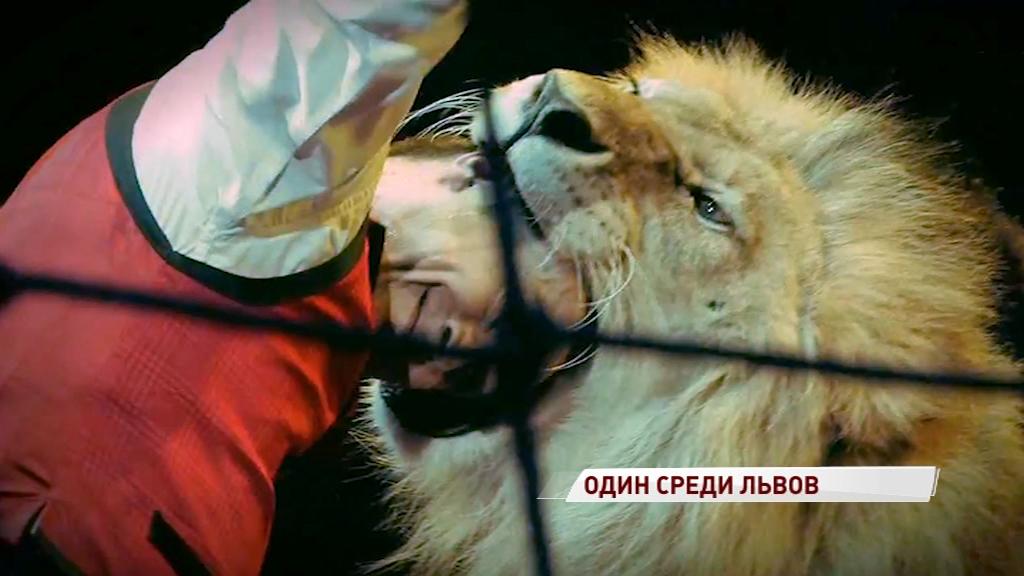 Один среди львов: чем удивила ярославцев программа – победитель фестиваля цирковых искусств