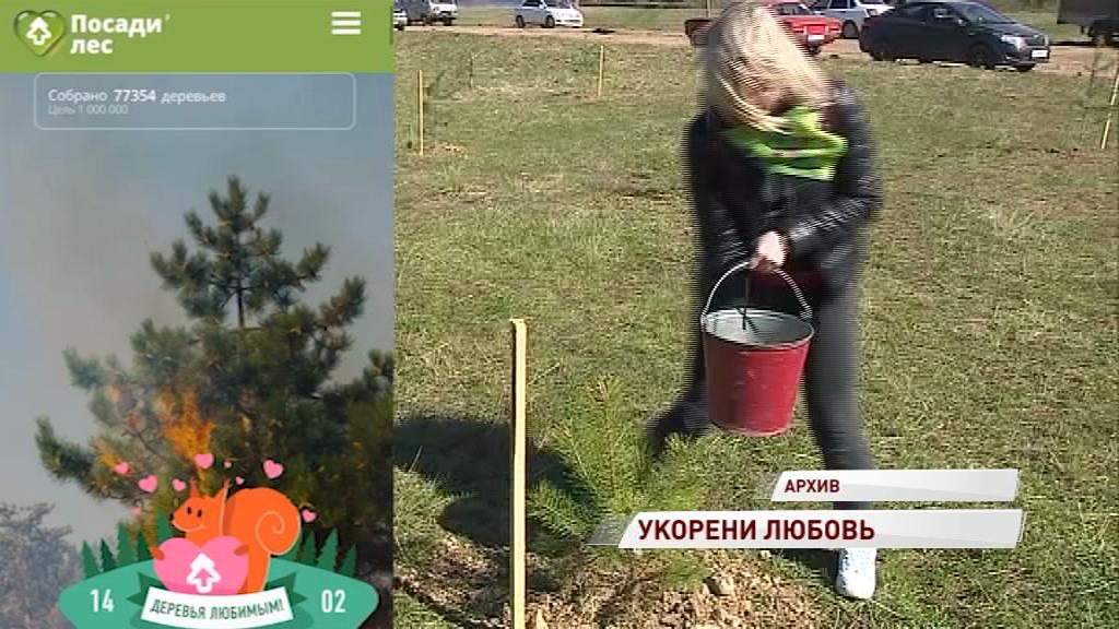 Ярославцам предложили вместо валентинок дарить деревья