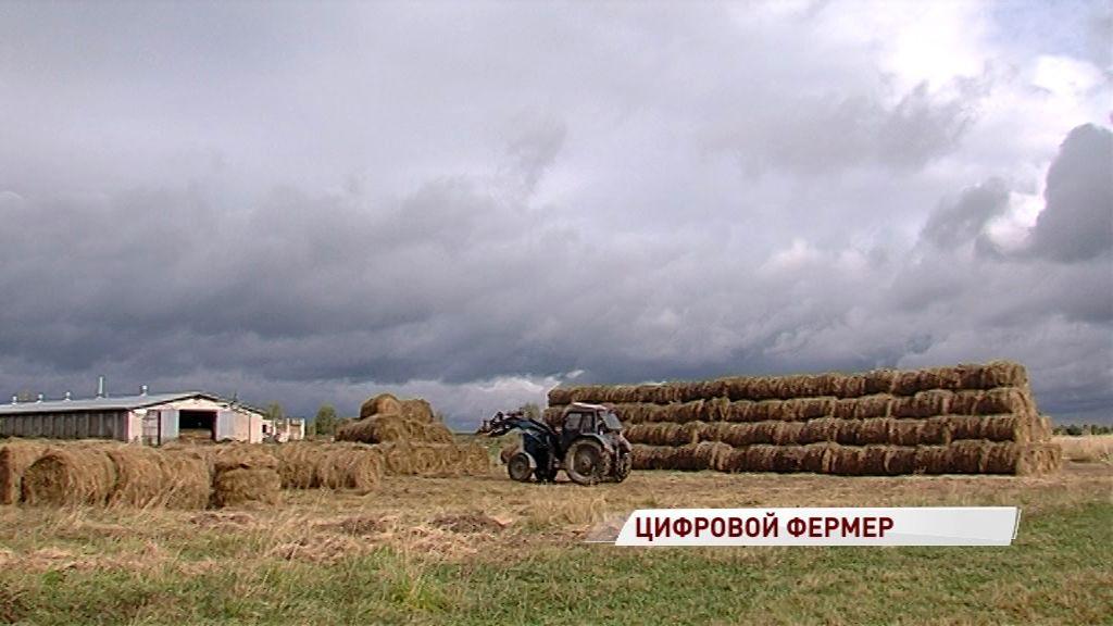 Минсельхоз прогнозирует увеличение урожая зерновых в 2019 году до 118 млн тонн