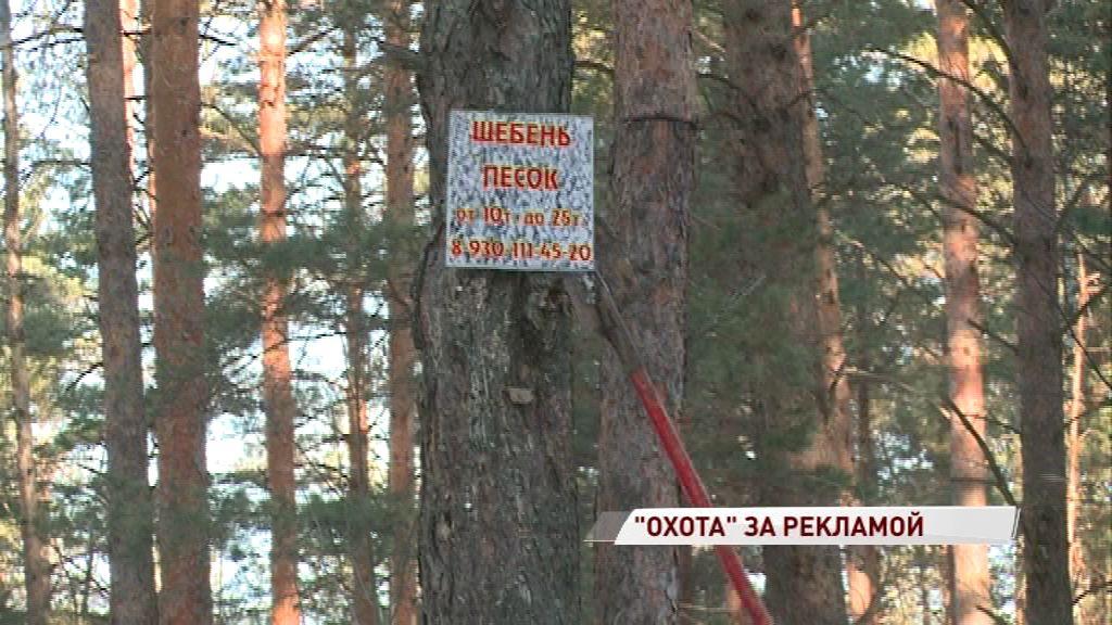 В области продолжается «охота» за любителями повреждать деревья рекламой