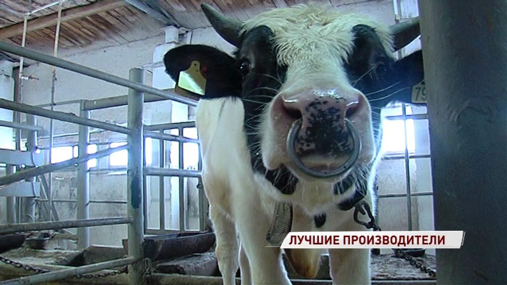 На областное племенное предприятие привезли быков из Канады