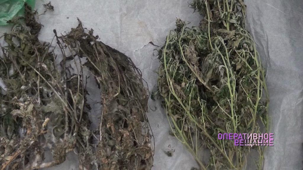 Житель Рыбинска в квартире выращивал марихуану