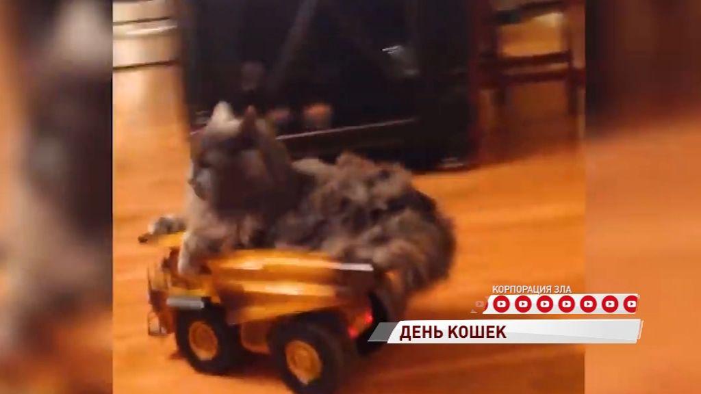 День кошек: за что ярославцы их любят