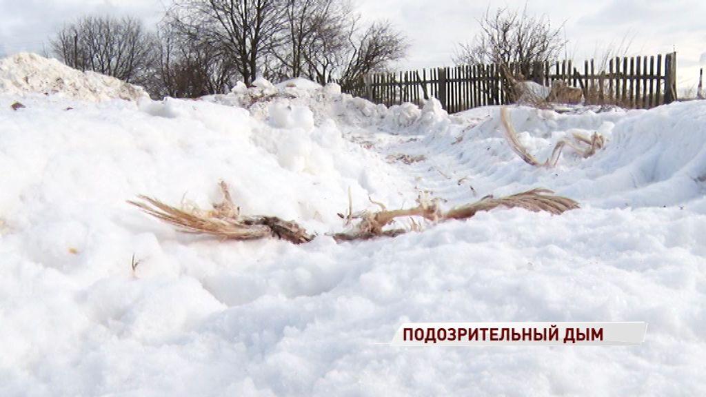 Сотрудники птицефабрики подожгли незаконное кладбище куриц