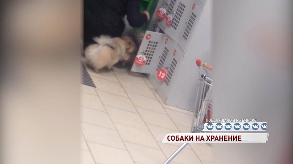 ВИДЕО: Жительница Рыбинска сдала шпицев в камеру хранения
