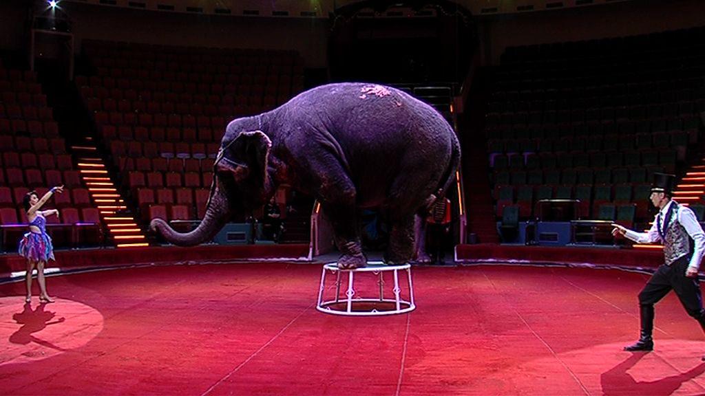 Аллигаторы, слоны и волшебная сказка о любви: чем удивят зрителей ярославского цирка
