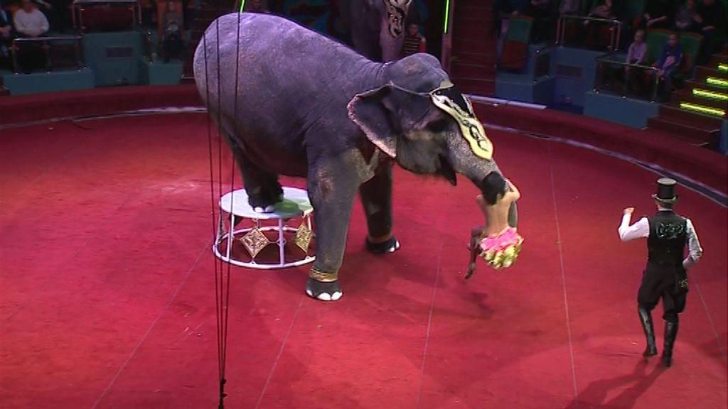 Зрители ярославского цирка могут посмотреть на выступления верблюдов, слонов и крокодилов