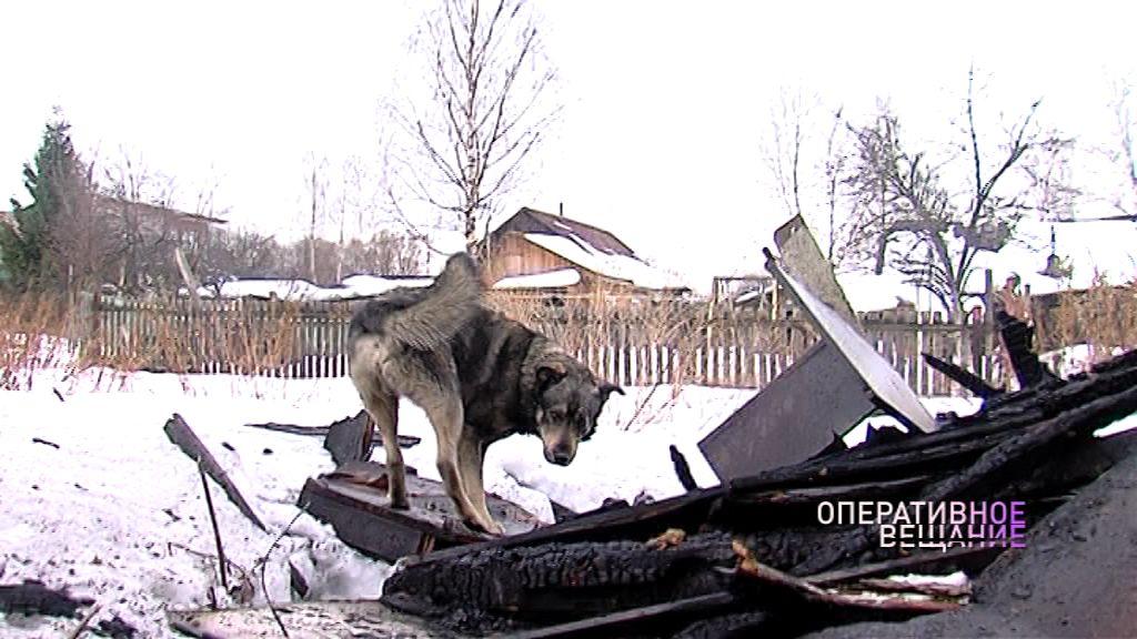 Хатико по-ярославски: на месте сгоревшего дотла дома пес ждет своего погибшего в огне хозяина