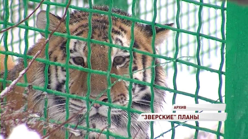 Амурской тигрице Яшме ищут партнера