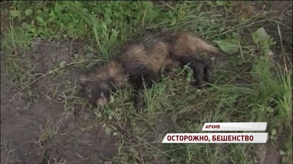 Новый случай бешенства зафиксирован в Ярославской области