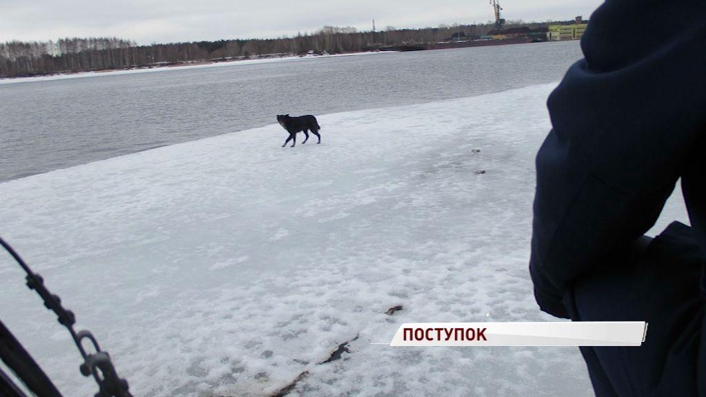 Сотрудники ГИМС сняли с льдины дворнягу