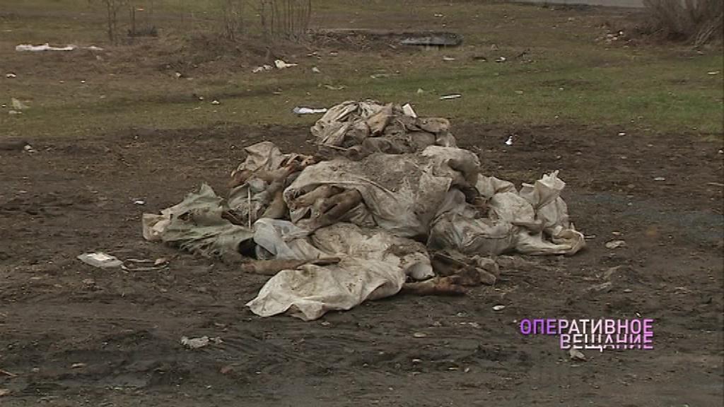 Неизвестные раскидали в Ярославле мешки с останками крупного рогатого скота
