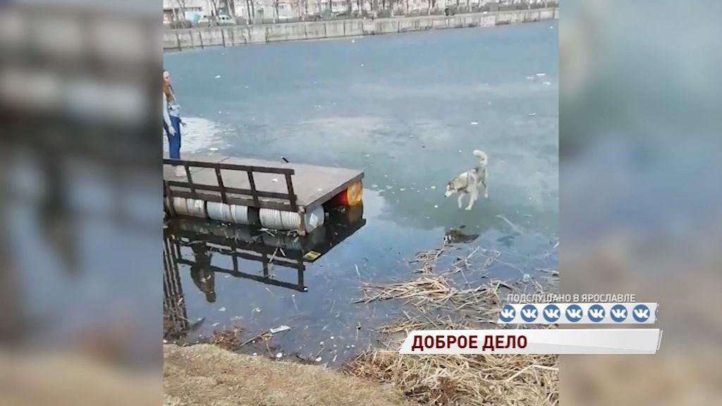 Ярославские подростки спасли собаку от гибели