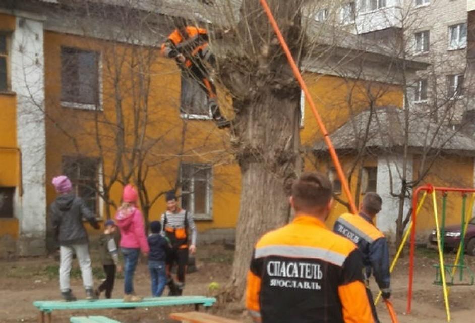 Ярославские спасатели помогли детям достать с дерева мячик