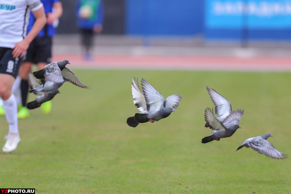 ВИДЕО: Футболист «Шинника» едва не убил голубя во время игры