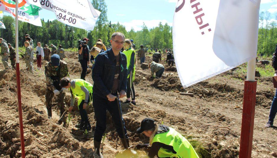 В Большесельском районе высадили девять тысяч саженцев ели